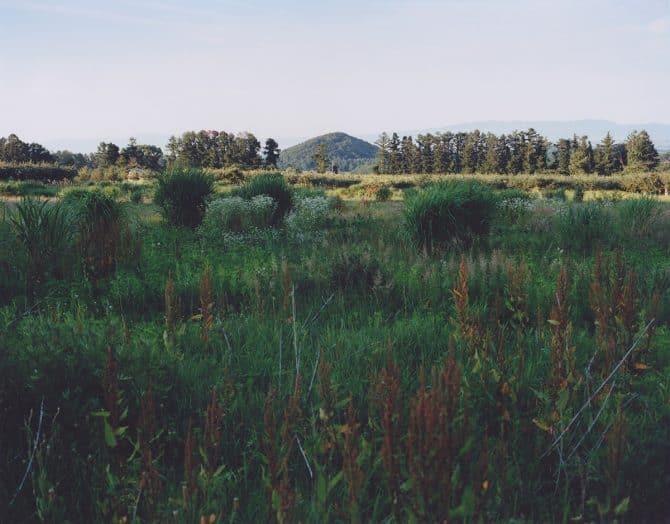 Grassland Tears