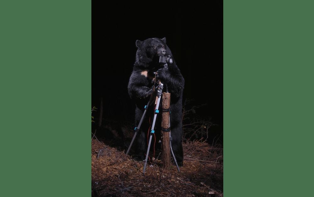 「カメラにいたずらするツキノワグマ」2006年