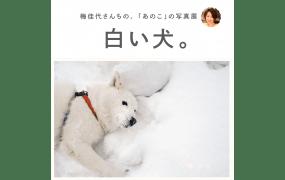 new-20160118kayo-ume_01