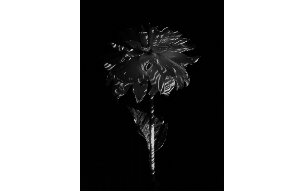 Avsökning|Blomma