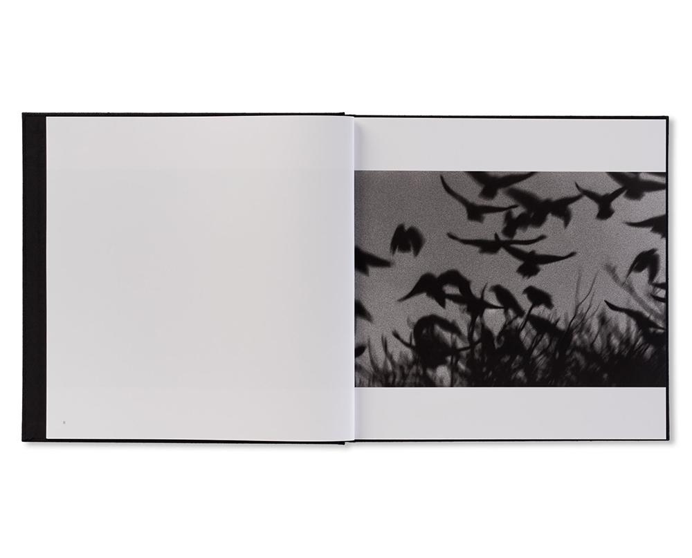 「鴉, 金沢, 1978」