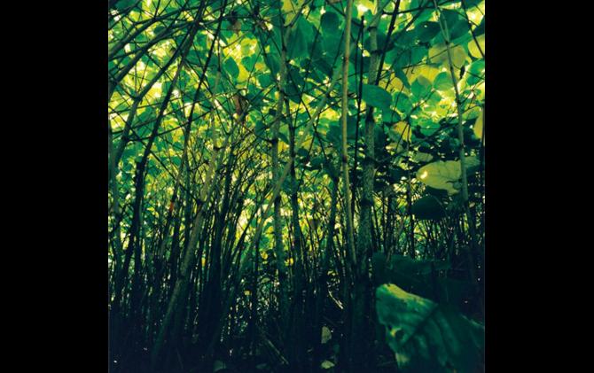 ©️ Watanabe Koichi「Moving Plants♯904」