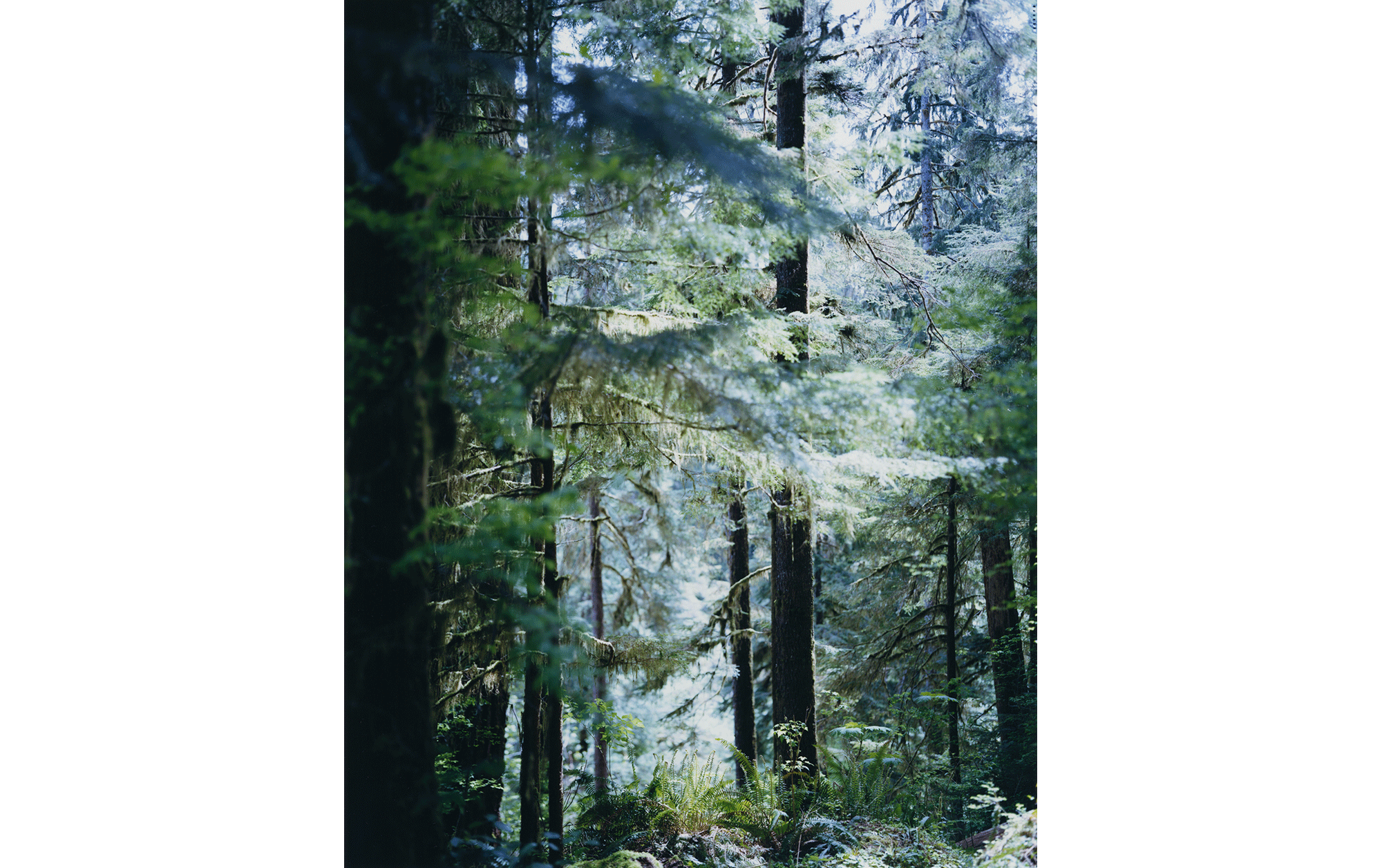 Quinault 2017 © Yoshihiko Ueda