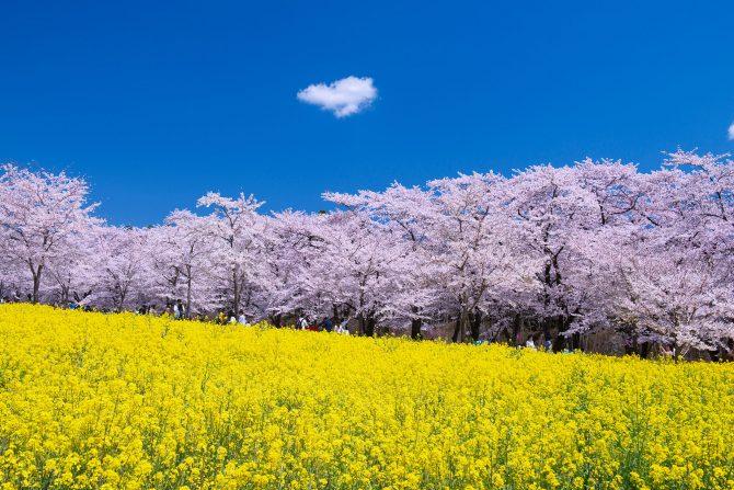 © HIROYUKI YAMAGUCHI/SEBUN PHOTO/amanaimages