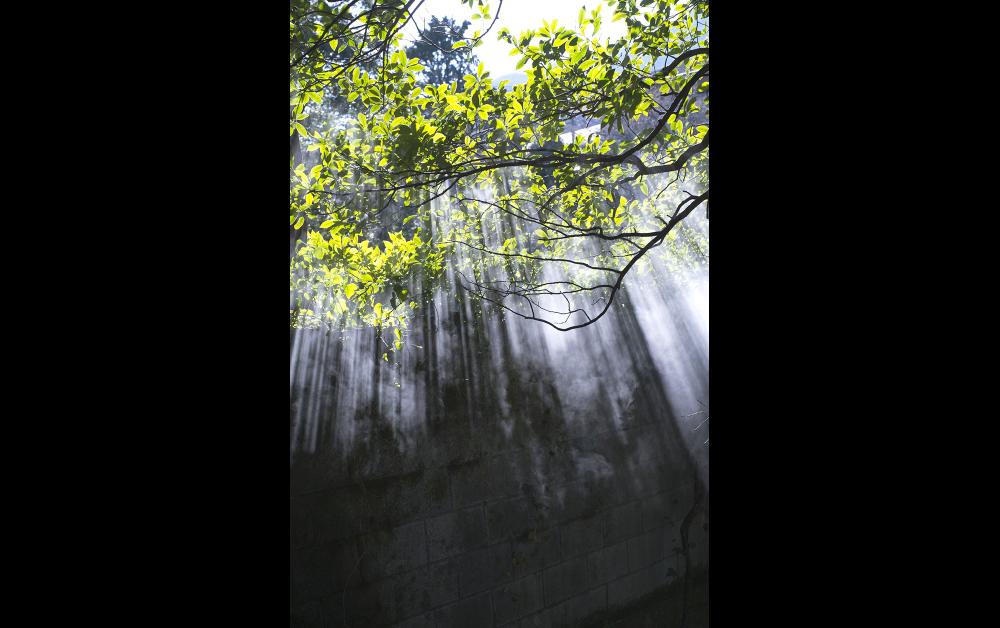 「箱根強羅、仙石原」2018年 © Tamami Iinuma