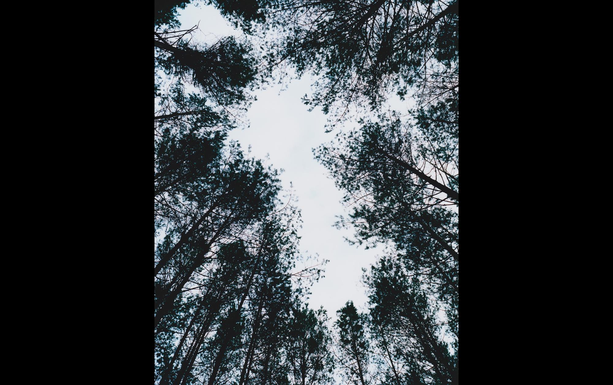 津田直「エリナスの森」より
