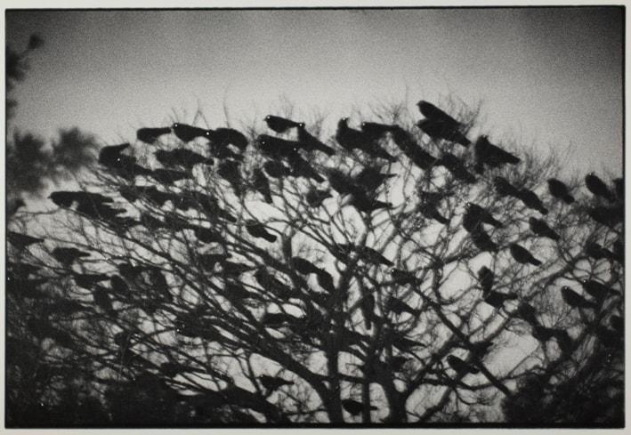 Kanazawa 1977 from the series Ravens