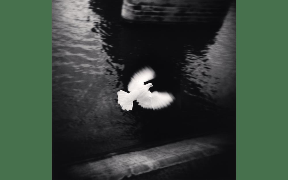 White Bird Flying, Paris, France. 2007