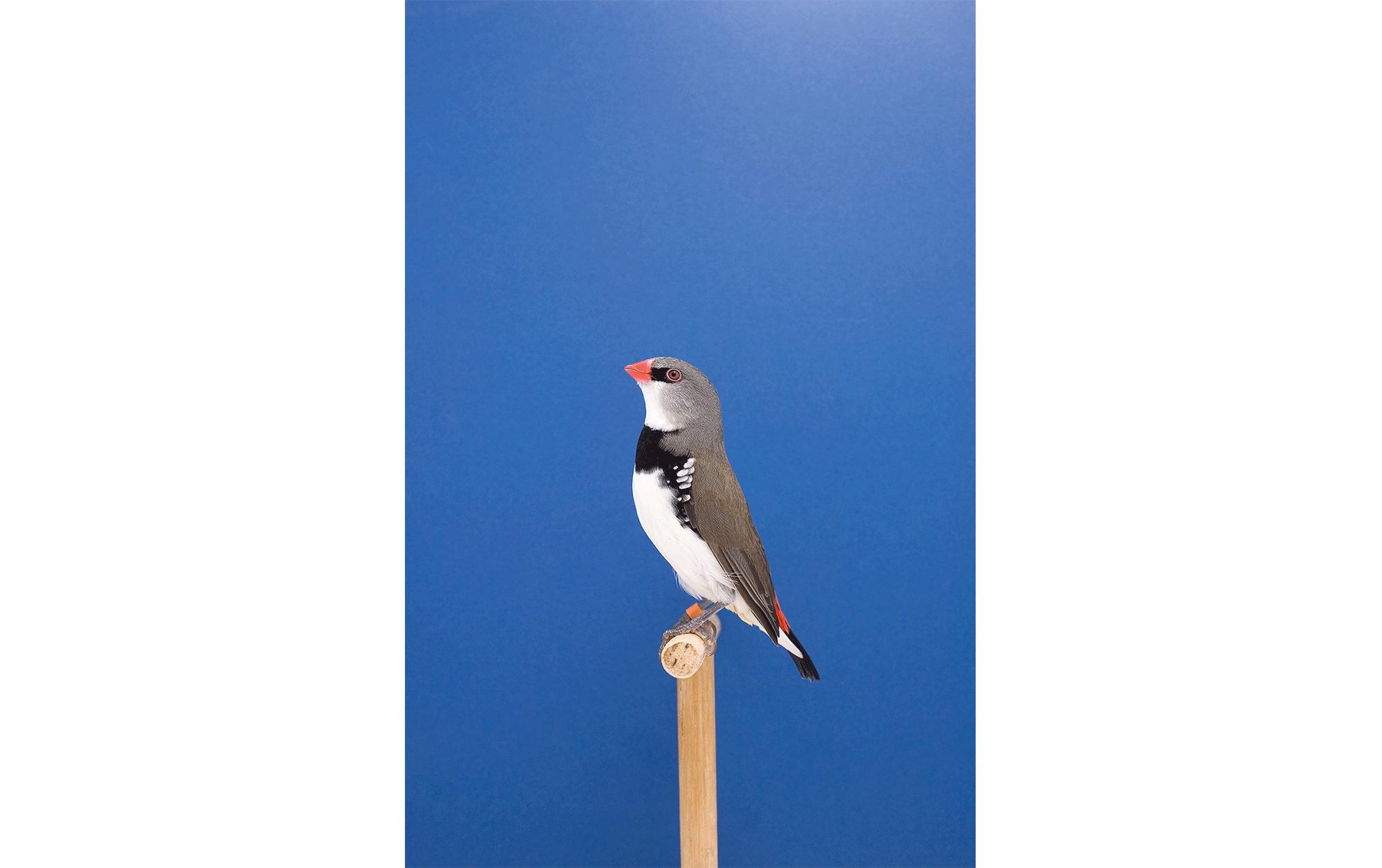 「浅間国際フォトフェスティバル」作家インタヴュー vol.6 ルーク・ステファンソン | An Incomplete Dictionary Of Show Birds