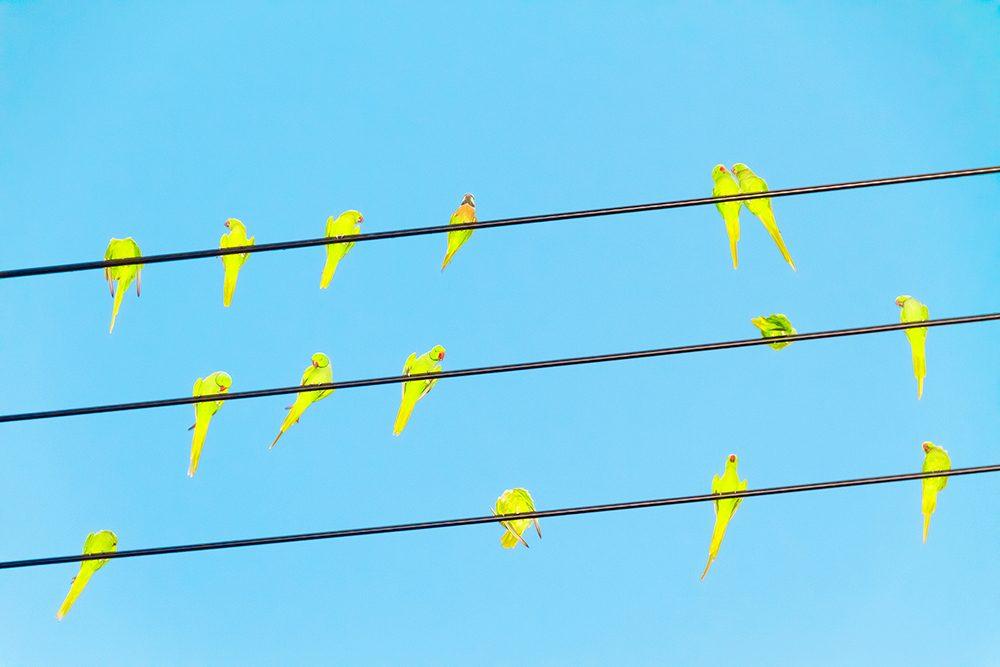 Untitled from the series Tokyo Parrots, 2013  © Yoshinori Mizutani Courtesy of IMA gallery