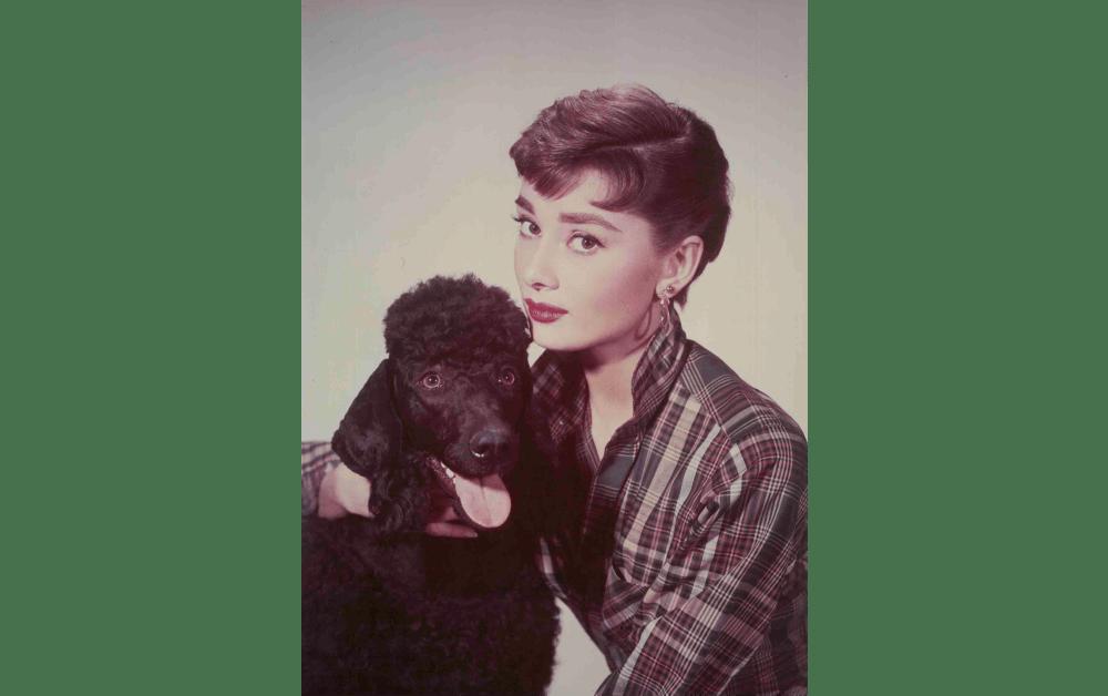 麗しのサブリナ 1954 © The Kobal Collection / M84