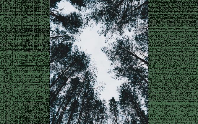 Elnias Forest