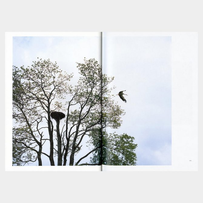 津田直『Elnias Forest エリナスの森』