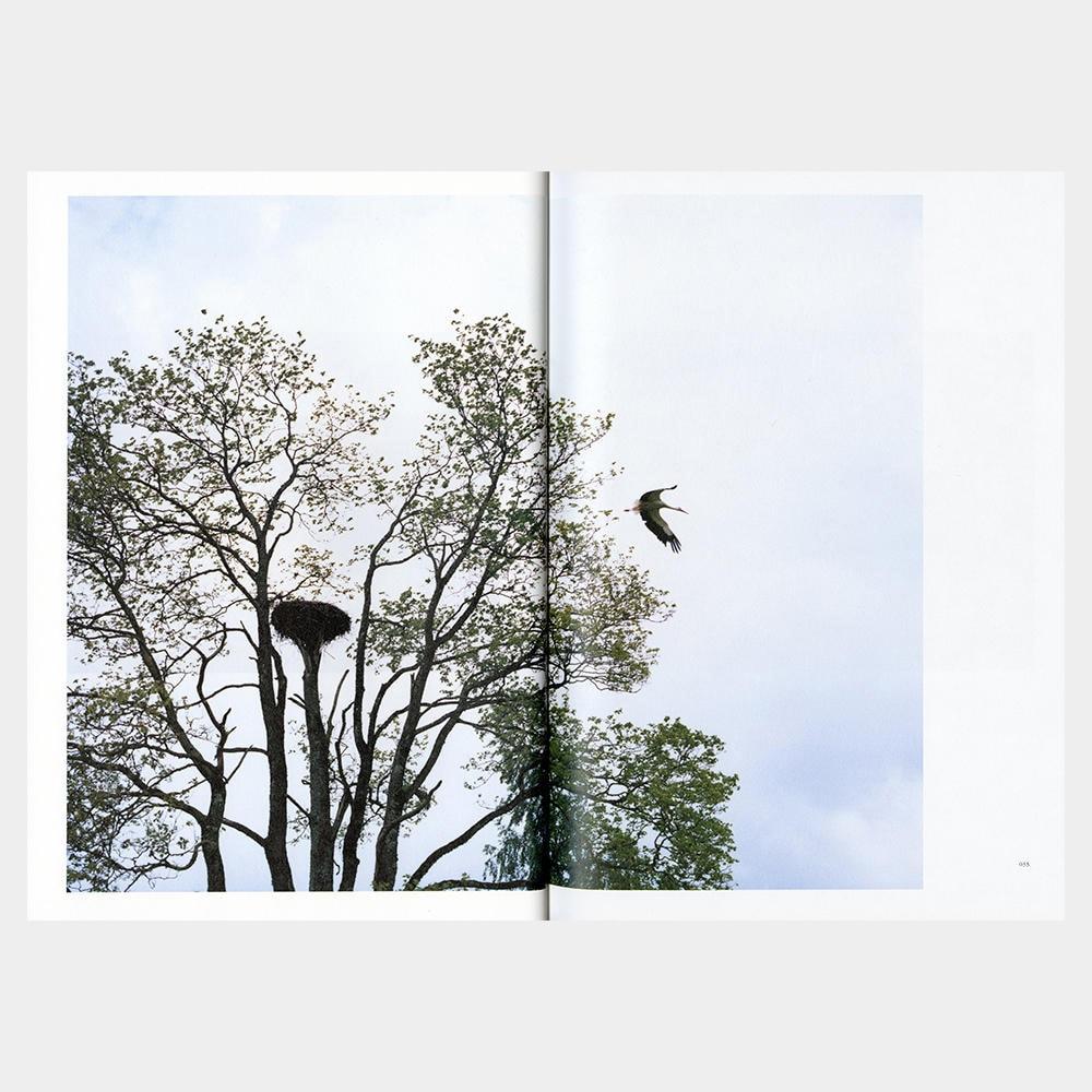 書店員がピックアップする2018年の売上ベスト写真集【銀座 蔦屋書店編】 | 津田直『Elnias Forest エリナスの森』