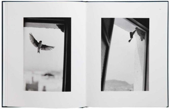 ベルナール・プロス『Des Oiseaux』