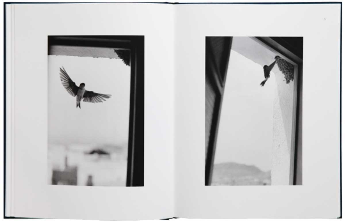 書店員がピックアップする2月のおすすめ写真集【Shelf編】   ベルナール・プロス『Des Oiseaux』