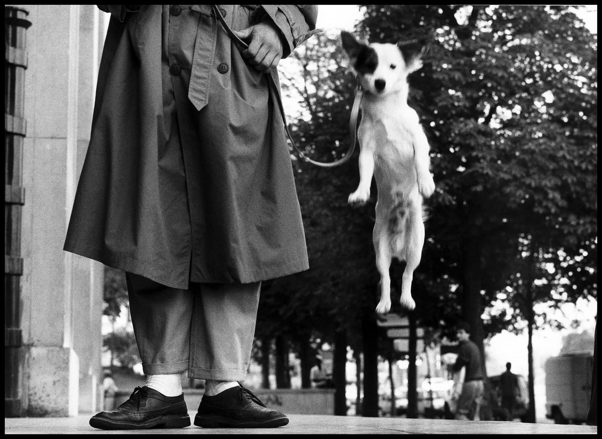 """マグナムの重鎮エリオット・アーウィットの代名詞""""犬""""にフォーカス ..."""