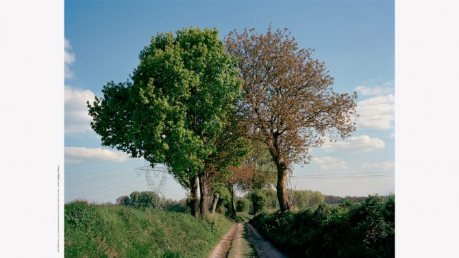 Entwined - Trees in the middle of a former trench at the Battle of the Marne 2017, Chromogenic print