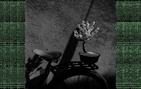 Issei Suda: A Personal Retrospective