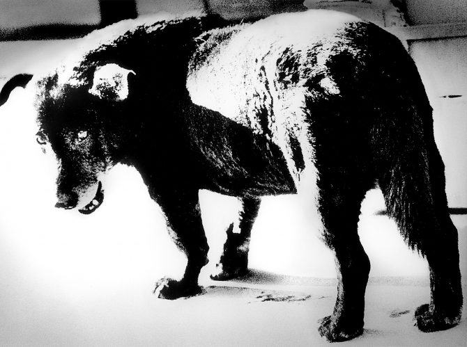 © Daido Moriyama photo foundation Courtesy of Akio Nagasawa Gallery