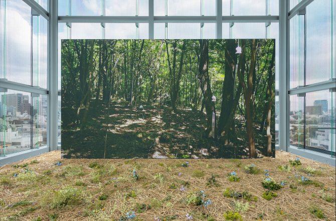 《アニミタス(ささやきの森)》日本 2016年