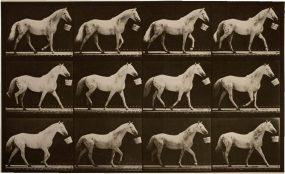 Light-Gray Horse Eadweard Muybridge / Premium Archive / Getty Images