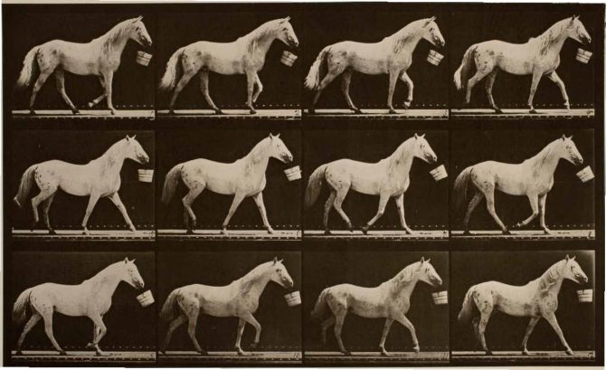 Light-Gray Horse Eadweard Muybridge / Premium Archive / Getty Images