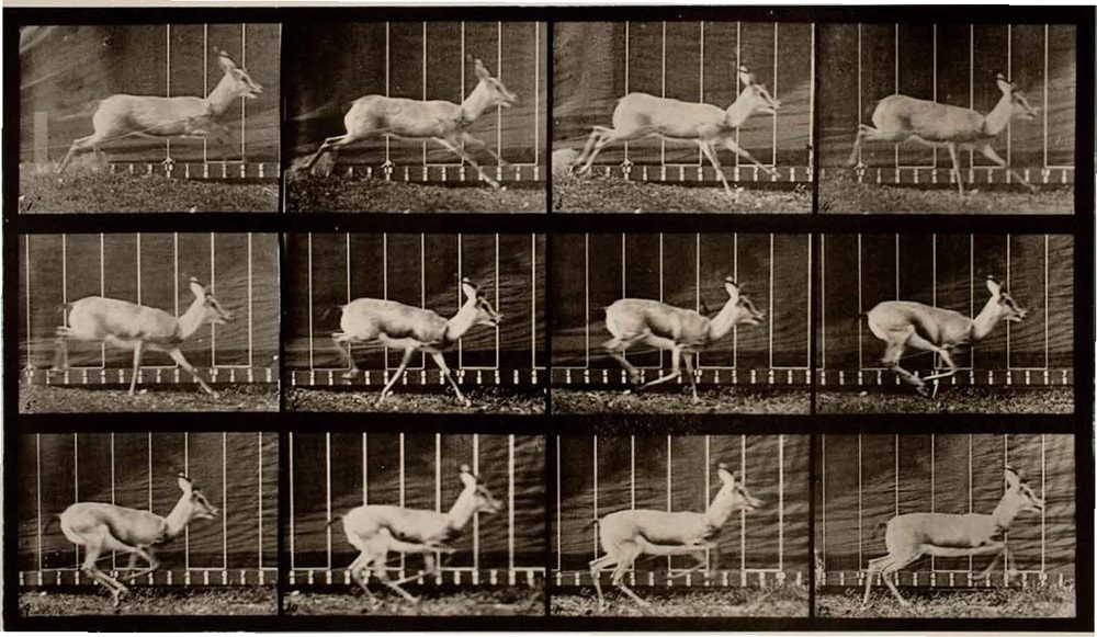 Antelope; Galloping Eadweard Muybridge / Premium Archive / Getty Images