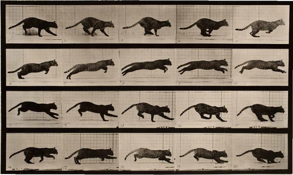 Cat Eadweard Muybridge / Premium Archive / Getty Images