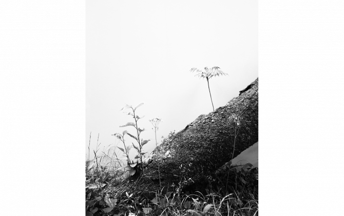 © Daichi Koda