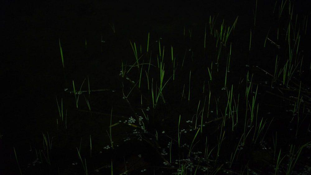 ミヤギフトシ《How Many Nights》© courtecy of Artist