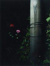 花と電柱 / 2019