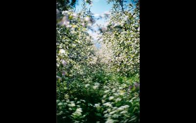 Lana, S.E.XV/L40, 2002 © Terri Weifenbach