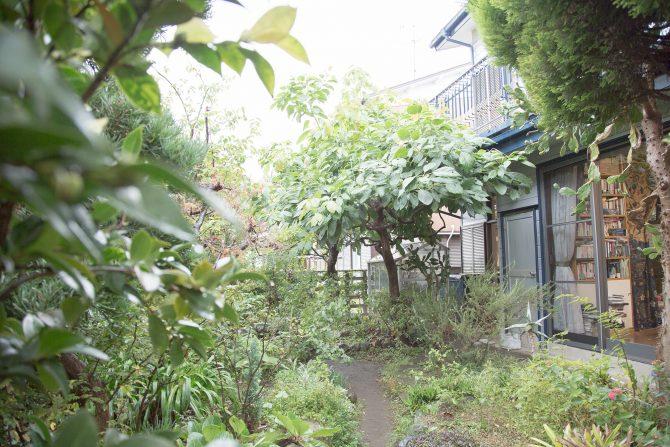 """サボテンやアボカドの木など、多様な植物が青々と生い茂る石内邸の庭。 そのほとんどは、""""緑の手""""を持っていた石内の母親が植えたものだという。"""