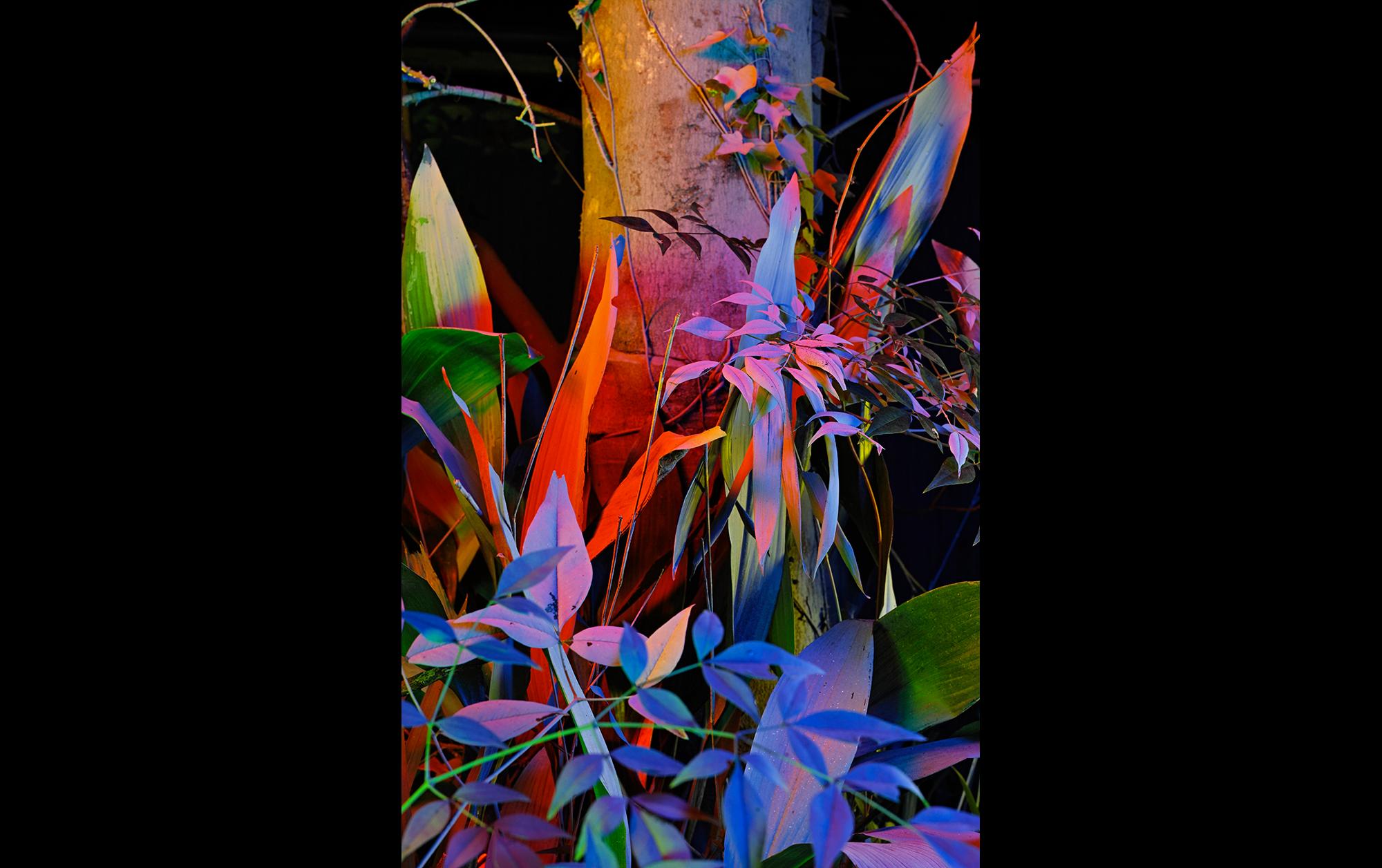 畑直幸「生活とともにある美術を目指し、自然の中で写真表現を開拓する」 | 畑直幸