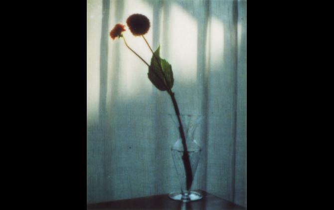 © Yoshiyuki Okuyama