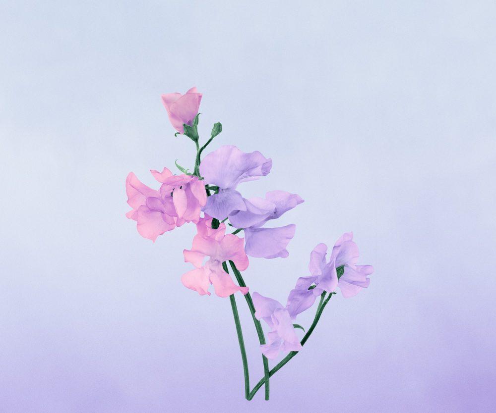 小川一眞の花写真インスパイアのパッケージが匂い立つロエベの香りでお家時間を豊かに