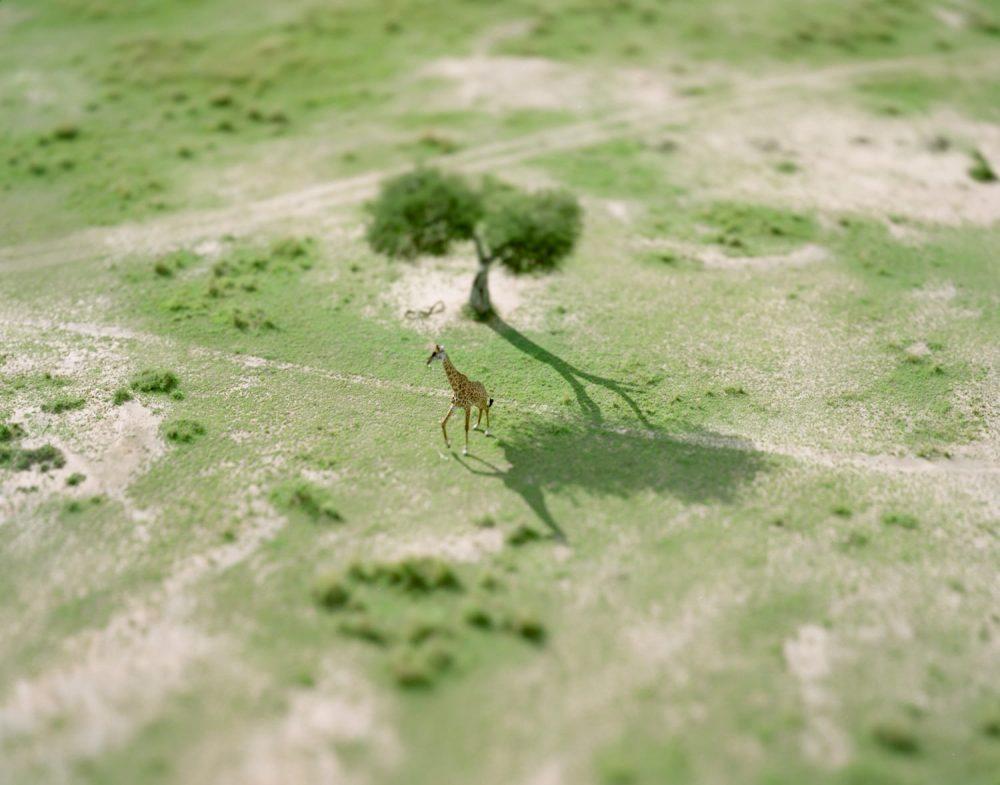 ≪giraffe≫, 2008(kenya シリーズより)
