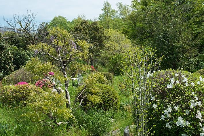 My Garden(2015-2020)