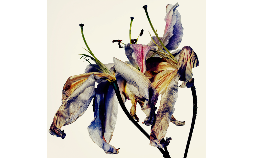 © Tajima Kazunali, Courtesy of Akio Nagasawa Gallery