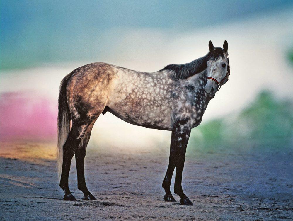 © Hisae Imai 名馬の肖像より「メジロマックイーン 優雅に立つ」(1993)