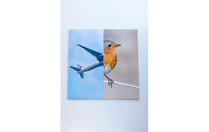 Birds / Erik Kessels, Anthony Burrill, Malcolm Goldie