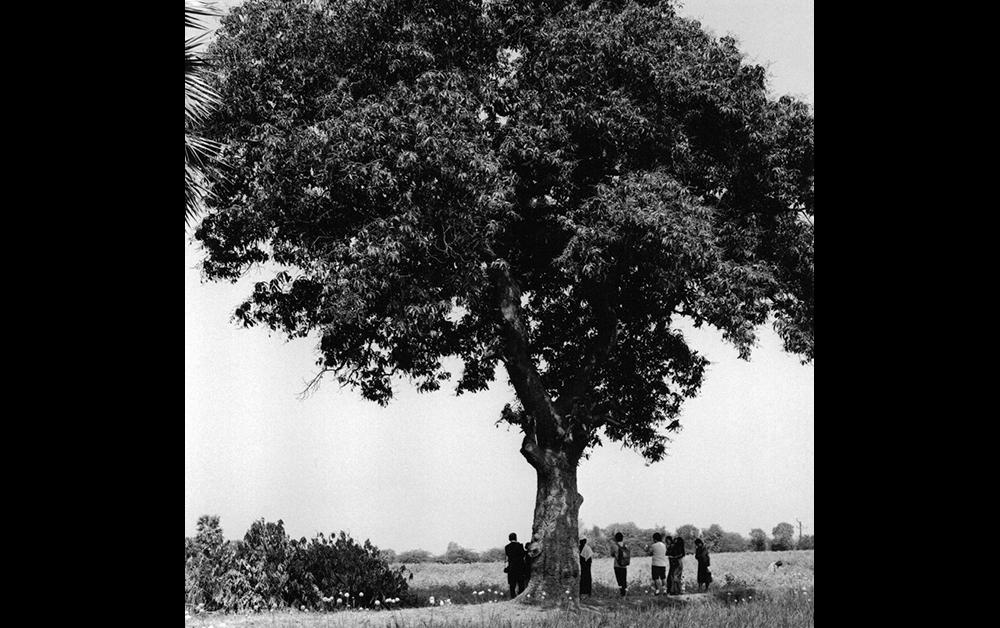 戦禍に立つ樹