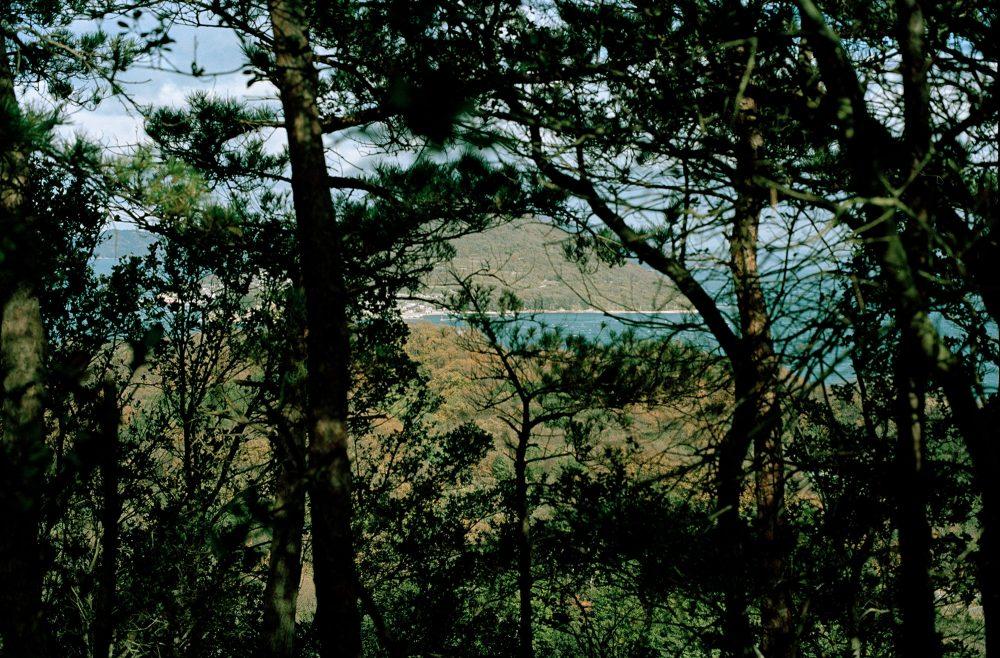 風の日は島を歩く