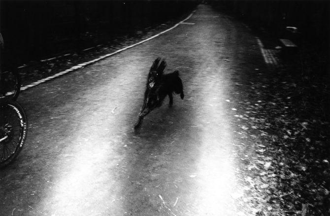 ウエマツタケシ「ベルリンの犬」