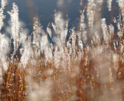 津田直《やがて、鹿は人となる/やがて、人は鹿となる #15》2020年 © Nao Tsuda, Courtesy of Taka Ishii Gallery Photography / Film