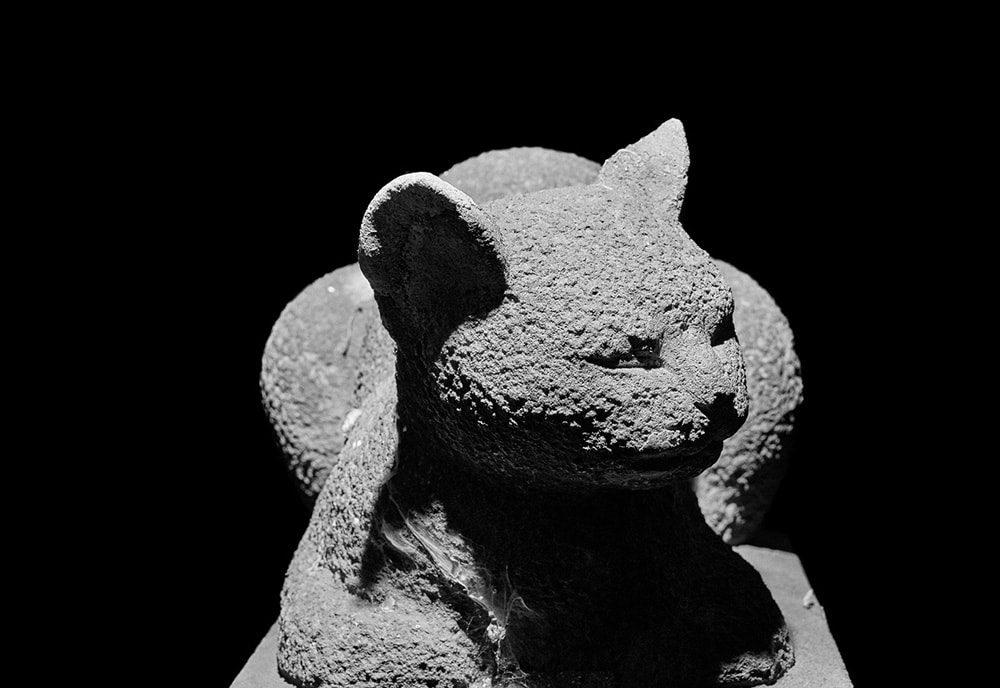 観泉寺 猫像:写真 西村裕介