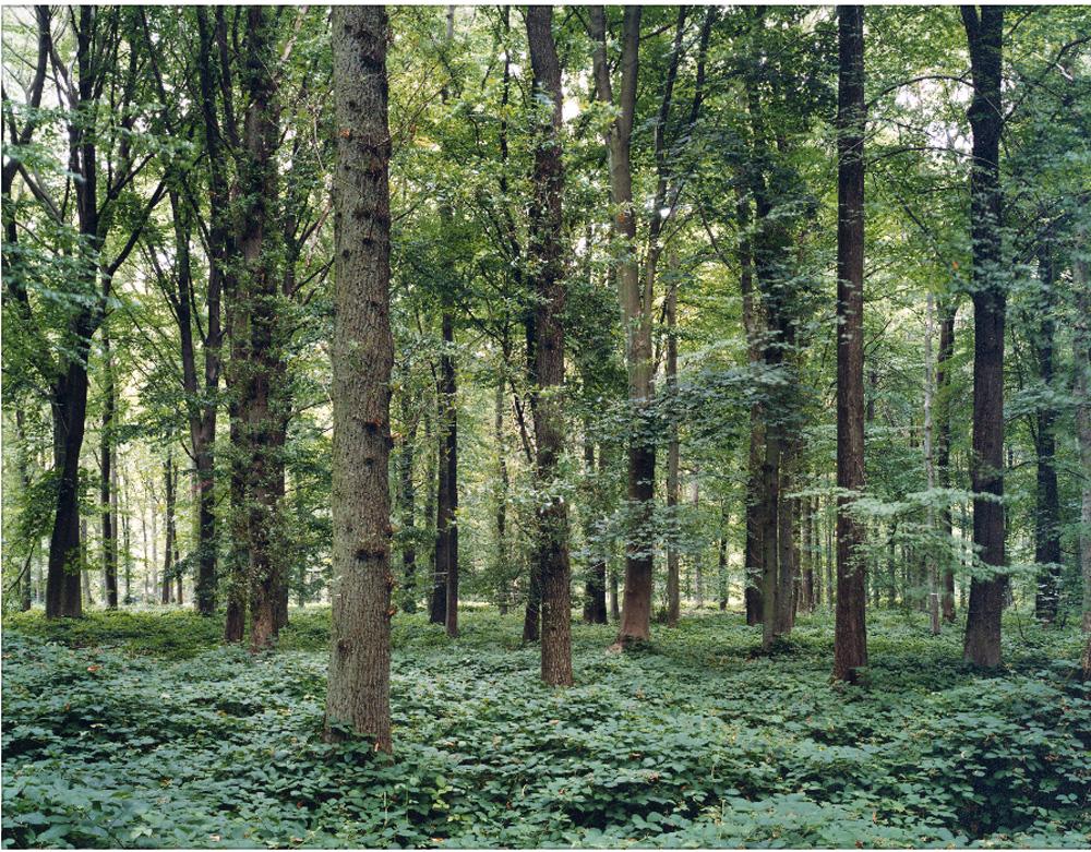シリーズ、Sceneより、森(ソンムの戦いがあった森/デルビルの森・フランス)2000