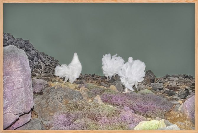 遠藤文香 Doves on the Mountain 2020 © Ayaka Endo