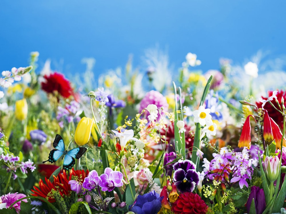 earthly flowers, heavenly colors (2017)  © mika ninagawa, Courtesy of Tomio Koyama Gallery